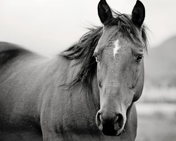 Items similar to Black and White Horse Portrait, Horse ...