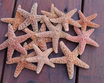 "Orange starfish variety of sizes (1.5"" - 2.5"") 10pcs"