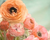 "Ranunculus Wall Art, Floral Print, Mint Green Peach Pink, Ranunculus Flower, Nature Photography, Still Life, Fine Art, ""Pastel Ranunculus"""