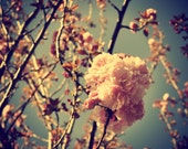 Spring Has Arrived Digital Photo Download Cherry Blossoms Vintage Style Picture Pink Flowers