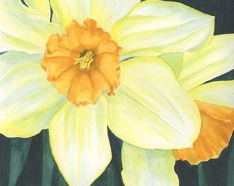 Daffodils, 8X10 Print
