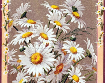 Daisies Card - Blank or Caption - Victorian Greeting Card Birthday Easter