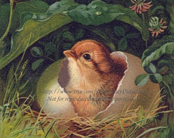 Chick Hatches Card - Spring Chick Easter Greeting Card Repro Prang