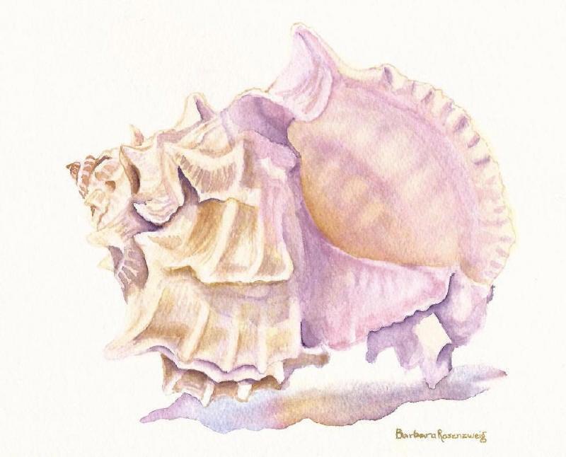 Seashell Painting Shell Beach Art Print Sea By