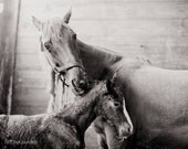 Horse Photograph Baby Mother Mother's Day