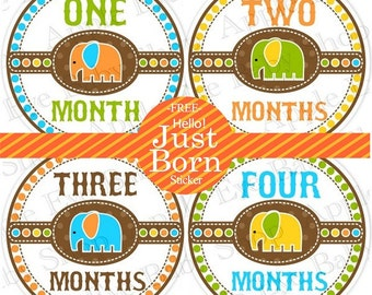 1st Year Baby Month Stickers, PLUS Just Born, Bodysuit Monthly Stickers, Baby Boy or Girl Neutral Milestone Stickers, Baby Elephants