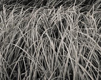 summer grass, 8x10 fine art photograph, nature
