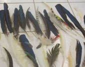 Distressed Feathers, Batch 2
