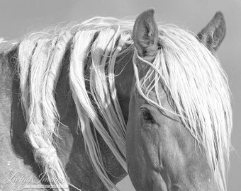 Wild Mane III - Fine Art Wild Horse Photograph - Wild Horse - Black and White