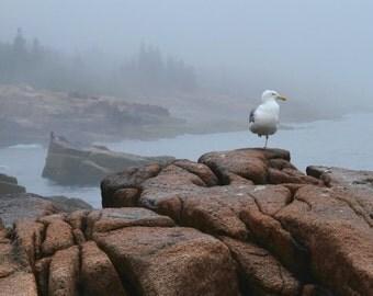 Seagull in Morning Fog Acadia National Park Maine Nature Photography Ocean Coast  Landscape Photograph Rocks Home Decor  Art Print