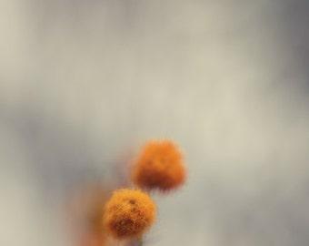 Mustard yellow, botanical print, ethereal, winter, grey, winter decor, floral, enchanting, flower ball, fine art photo, 8x10 print, minimal