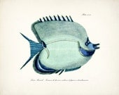 Fish Illustration - Fish of the Coral Reefs Beach Style Nautical Giclee Print Aqua Size Options