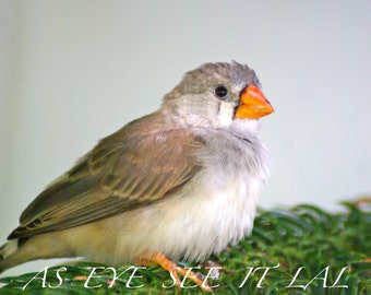 Juvenile Finch on a branch photo card 5x7