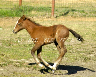 Running Foal from a Cutting Horse Ranch 5x7 photo greeting card