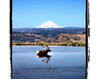 Larry the Elk in a Pond with Mount Hood in the Background Fine Art Print