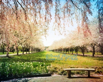 Cherry Blossoms and a Bench Spring Philadelphia Landscape Photography Product Options and Pricing via Dropdown Menu