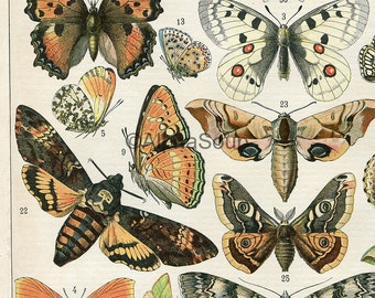French Butterflies Moths Repro Photo Poster print 8x10 to 30x40