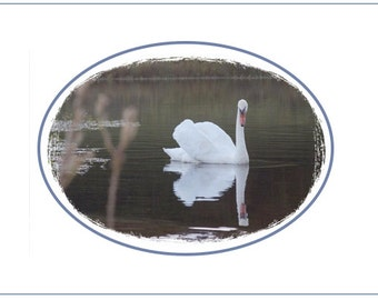 Swan Photo Note Cards--8 pack