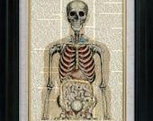 Human Anatomy 03 Vintage Illustration on Book Page Art Print (aca003)