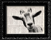 Goat Head Vintage Dictionary Print Vintage Book Print Page Art Upcycled Vintage Book Art