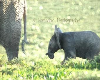 Elephant baby photograph mom and baby, animal photography, baby, nursery room art, baby elephant, nomadah photography, 8 x 10