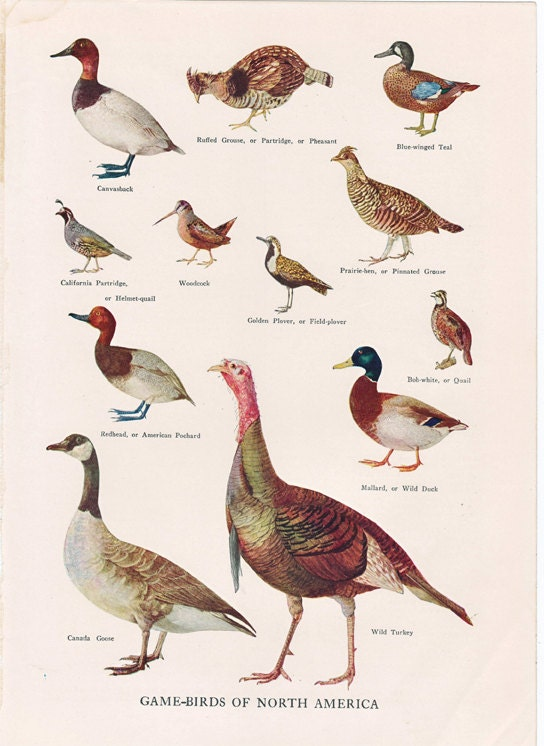 vintage bird print \u002639;Game Birds of North America\u002639;