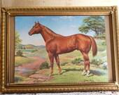 Vintage 1960s horse postcard , handsome stallion vintage postcard no writing on back