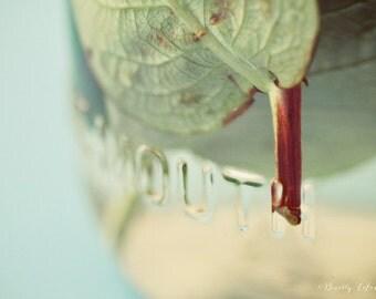 green, blue, still life, leaves, nature, fine art photography