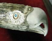 Custom Carved Eagle Head of Elk  Antler  Hunting Knife