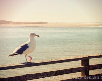 Beach Photography Oregon Coast Seagull Pastel--Fine Art Lomography 8x12 or 8x10