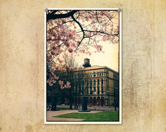 Portland Oregon Old Town Springtime Cherry Blossoms Pink--Fine Art Lomography 8x12