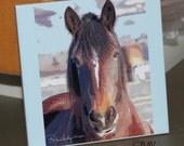 "Ceramic Tile or Coaster  - Horse 'Smiley'  4.25"" x 4.25"""