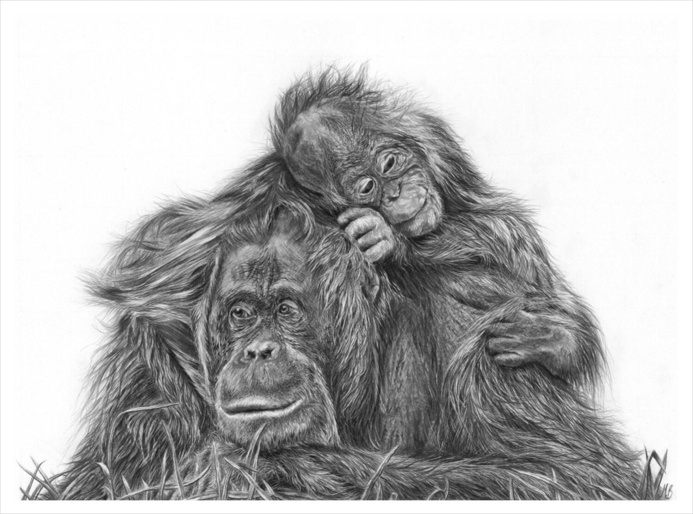 Uncategorized Orangutan Drawing orangutan mother and baby drawing art print