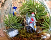 Jumbo Medieval Knights and Air Plant Moss Terrarium with Charm - An Awesome Fathers Day or Birthday Gift