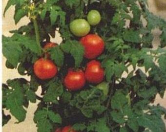 Patio Heirloom Tomato Seeds