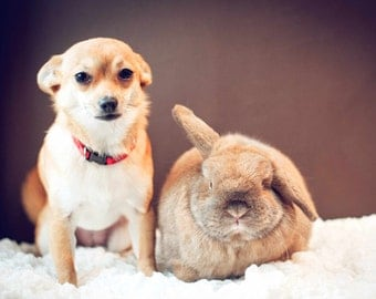 Rabbit and Dog photo card