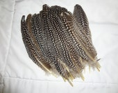 Beautiful Black and White Guinea Fowl Wing Quills Zebra Wholesale Bulk Supply Feathers Design Craft Smudge Wand