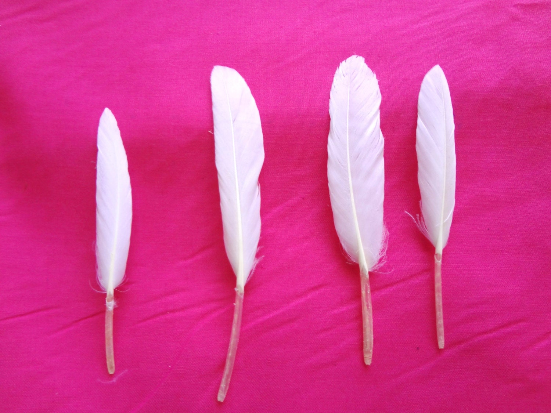 White craft feathers bulk -  2 00