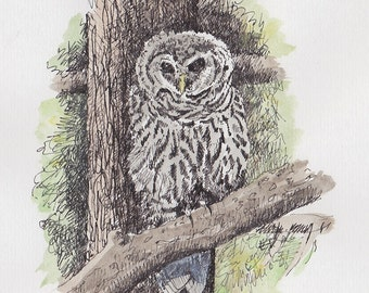 Northern Spotted Owl 2013 -  Archival Print