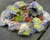 Miniature Fairy Tidal Pool