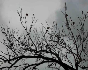 Tree Photograph, Black and White, Tree Art, Photo, Photography