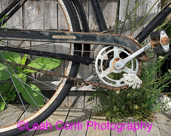 Three Spire Bicycle Cape Cod Wellfleet MA Photo
