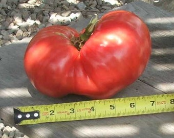 Heirloom, Mortgage Lifter Tomato, Heirloom Seeds Grown on Our Farm, 20 Seeds