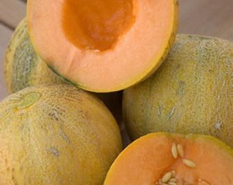 Heirloom, Minnesota Midget Cantaloupe, Small Fruit, Orange Flesh, Gardeners Favorite, 20 Seeds