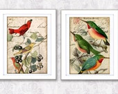 BIRDS PRINT.  set of 2  Vintage  Frames Interior Design  Antique  Digital Collage Art Print Home Decor Wall Hanging Home and Garden