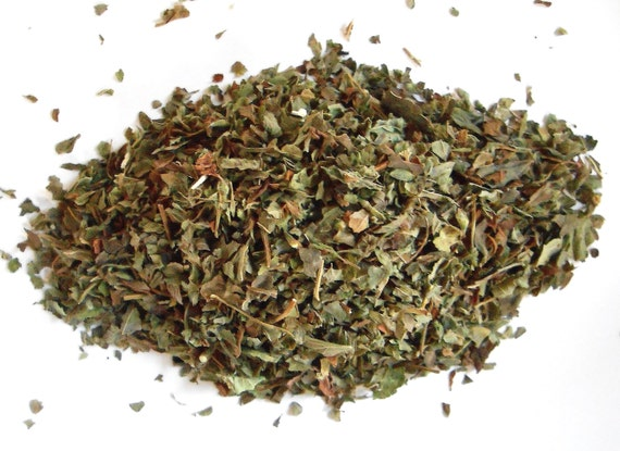 LEMON BALM, Organic - Melissa Officinalis - Makes a Delicious, Lemony Tea