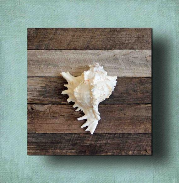 Items similar to beach decor seashell on driftwood for for Beachy decor items