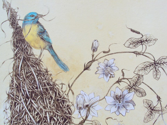 Items Similar To Original Drawing Bird Weaver Nest And Lace Lacemaker Clematis Fine ...