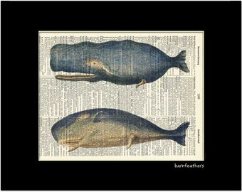 Dictionary Art Sperm Whales Print vintage dictionary page book art print No.P156