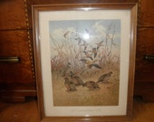 "Lynn Bogue Hunt Framed Print: ""Morning Dove And Bob White"""